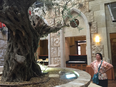 The tree that gives the Olive Tree Hotel its name